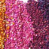 colored quinoa