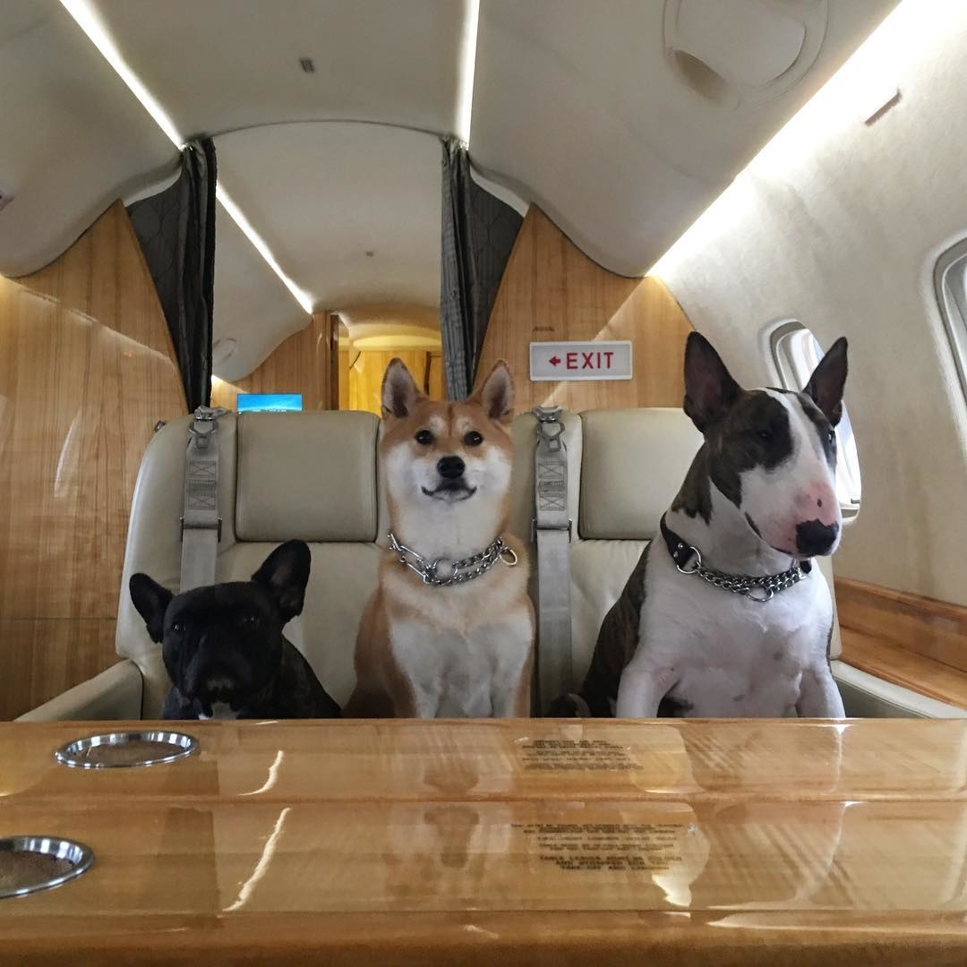 Pets in the jet
